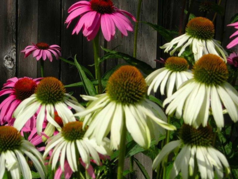 Garden2010_067