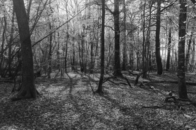 Forest_Light.jpg