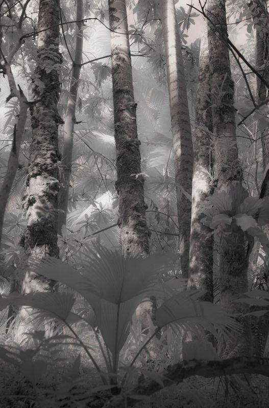 RAIN_FOREST1