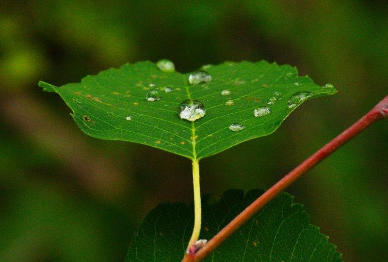 rian drop on a leaf