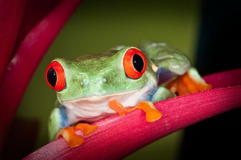 Frog12Fl