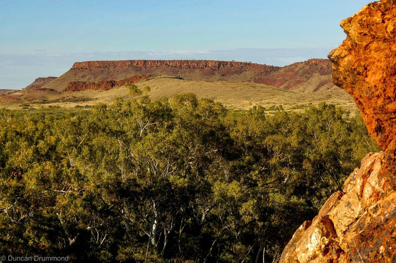 Rock Man of The Pilbara surveys his domain
