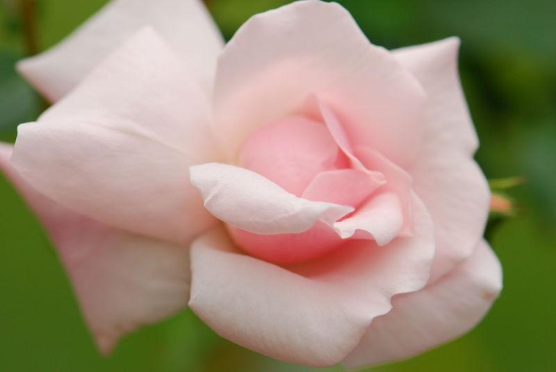 Margie Rose