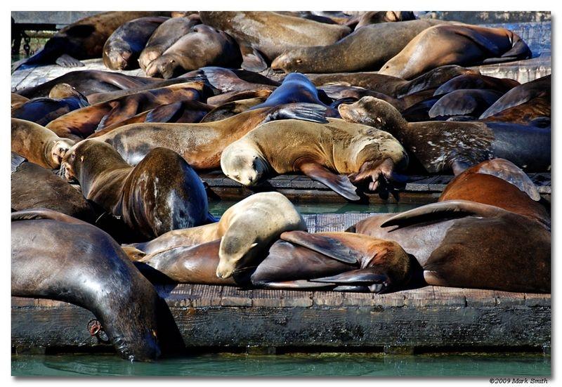 Sea Lion Snooze