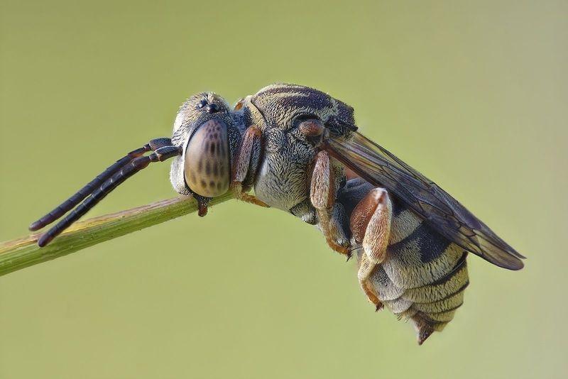 Sleeping Bee