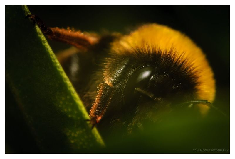 Meet Bumble Bee
