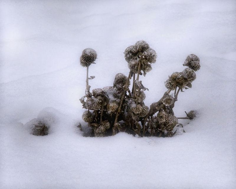 Winter Survival Mode