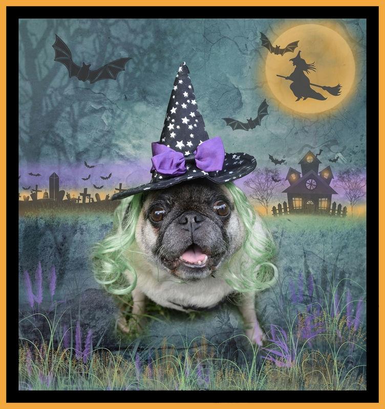 """China"" Pug Witch - Halloween"