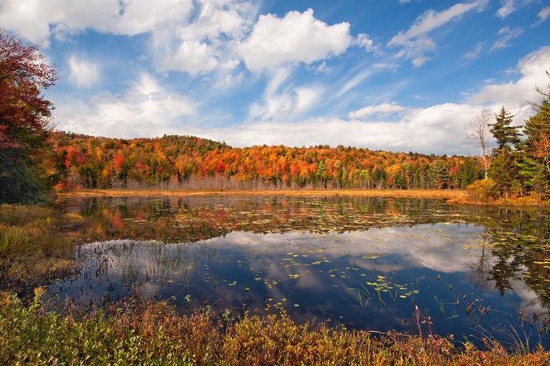 Foliage at Harrisburg Lake