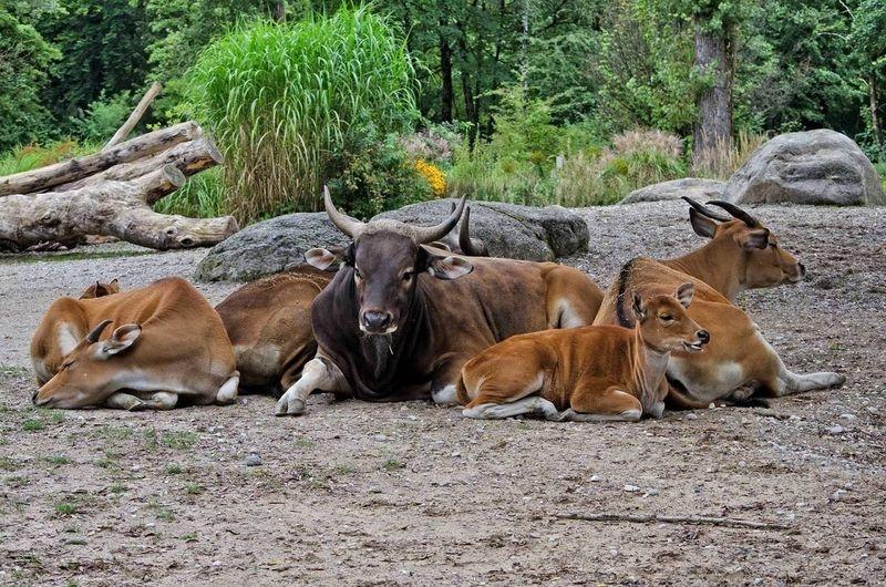 Tierpark_Hellabrunn_2015_031