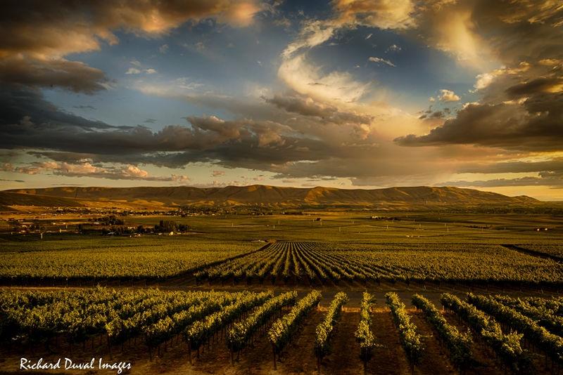 Dusk on Red Mountain vineyards