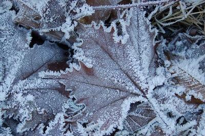 Beauty of a Frosty Morning