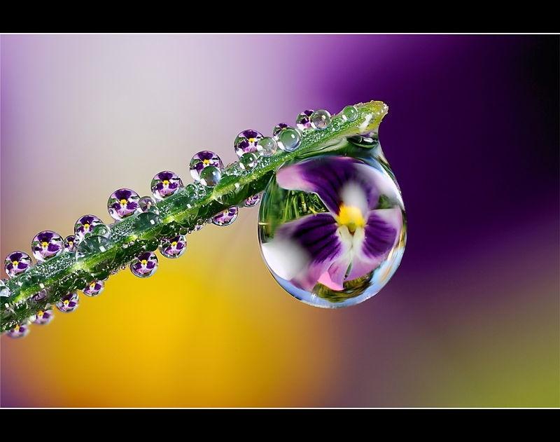Dew Drop refraction macro