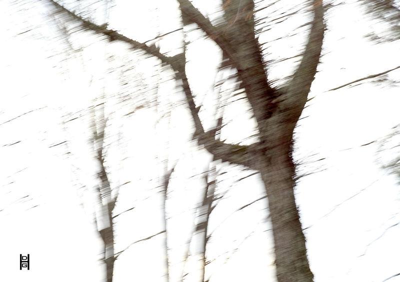 Psycho trees