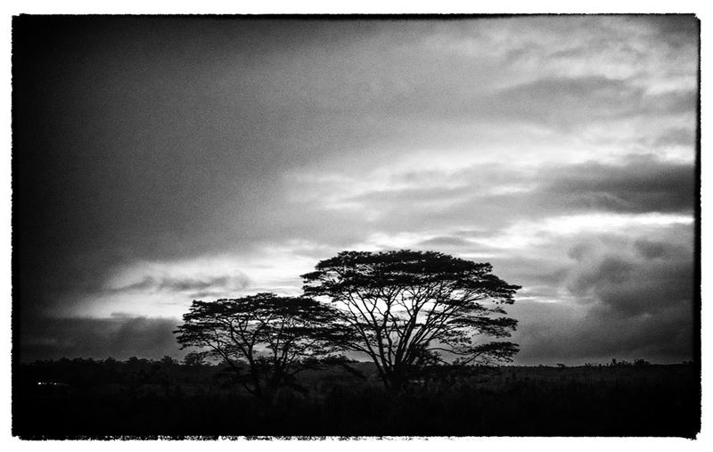 TREES_4163A