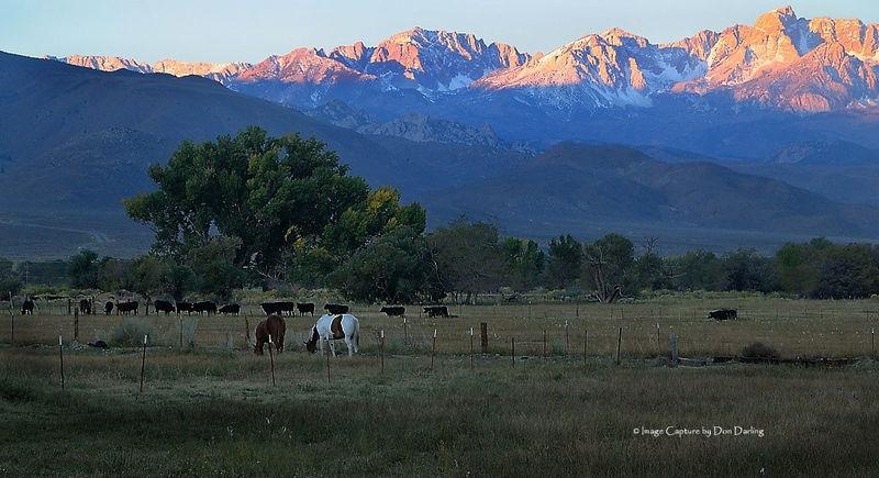 Grazing Below The Sierras