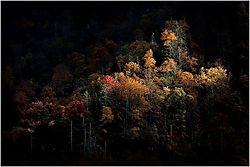 Spotlit Trees in the... (scottashley)