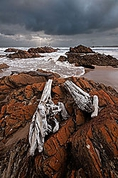Just outside the mouth of the Arthur River on Tasmania, Australia's wild west coast. The coast here is littered with drift wood, some small pieces and some entire trees. They are washed down the river during storms and smashed onto the beach by the often raging tides in this region.