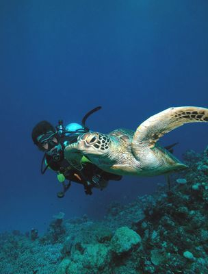Son with Green Turtle