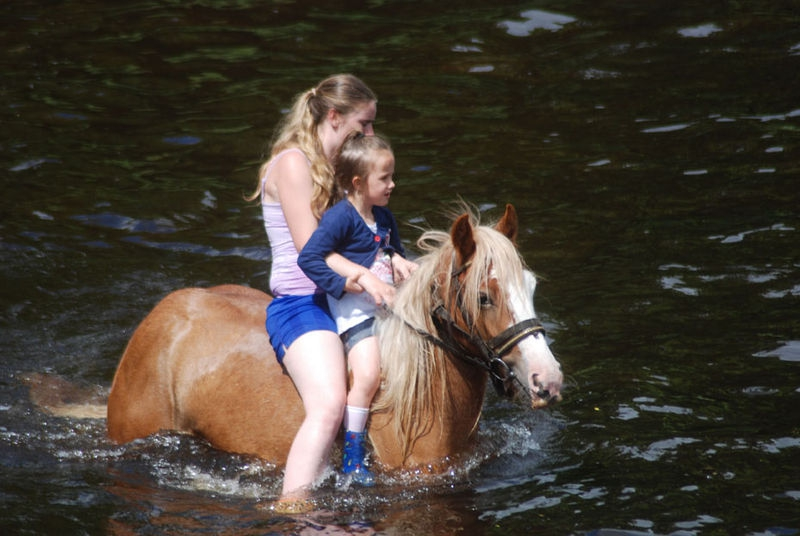Swimming the horses 2