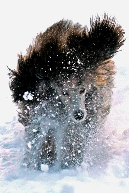 gilda_snow_4