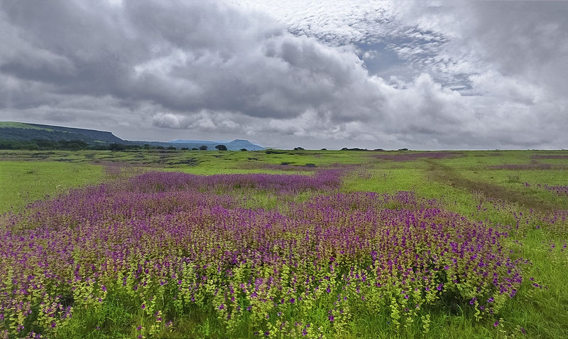 Vally of flowers,