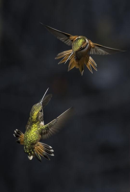 Masters of Flight