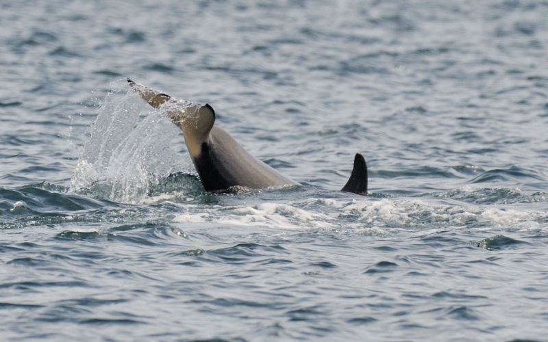 Whale Watching during Nikonians ANPAT10