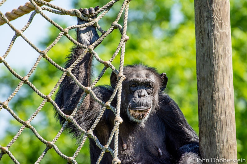 Showcase of Nature at the Tulsa Zoo