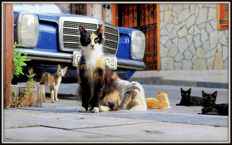 The Street Life of Cats
