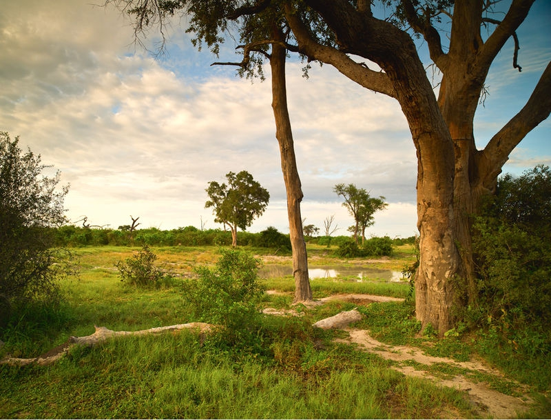 African Dusk, Botswana Watering Hole