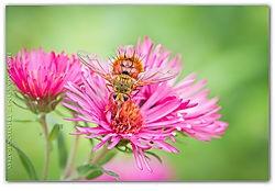 Beelike Fly /jesse101/