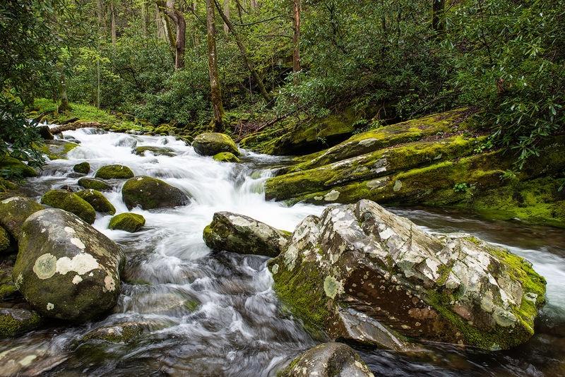 LeConte Creek