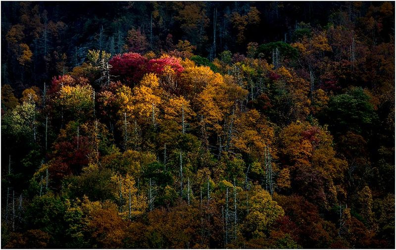 Forests - Spotlit trees on mountainside