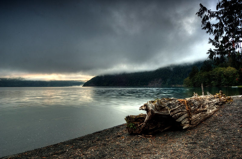 Dead Trunk at Lake Crescent