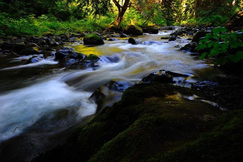 The feeding stream of Sol Duc Falls