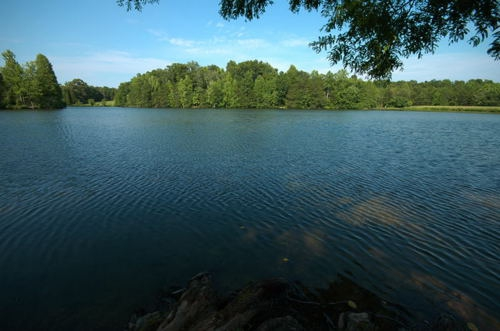 Ripples_on_a_Pond
