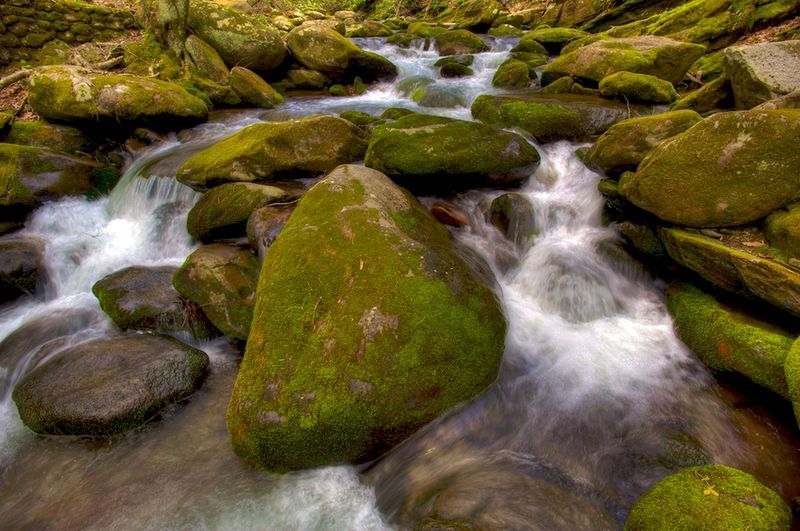 Moss Covered Rocks and Water