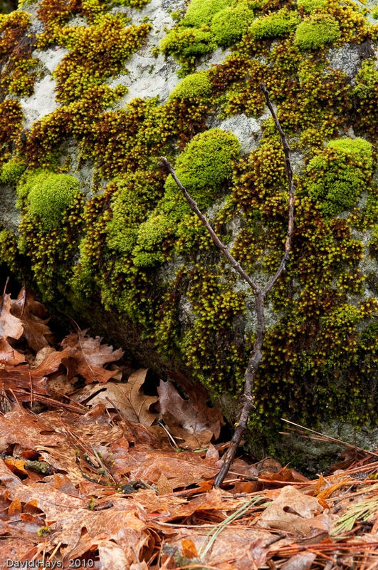 Moss-covered rock w/ leaves and stick