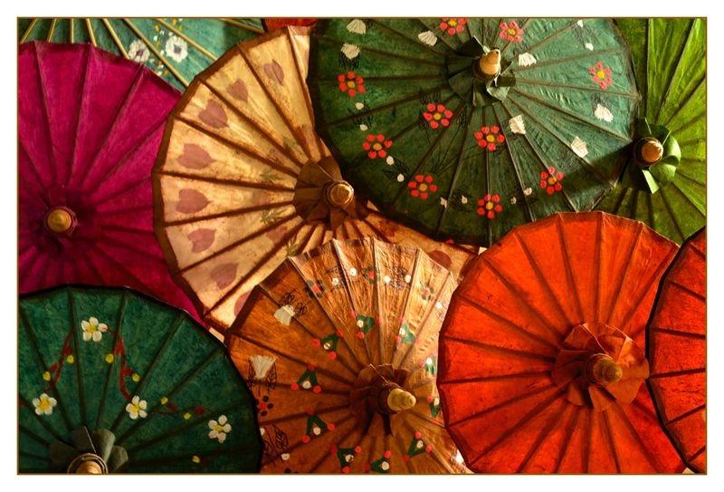 Burmese Parasols