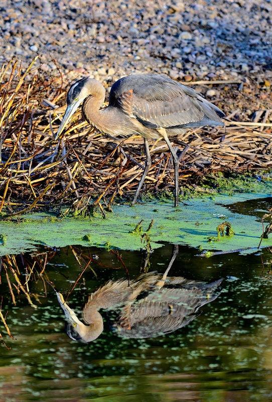 Pond hunter