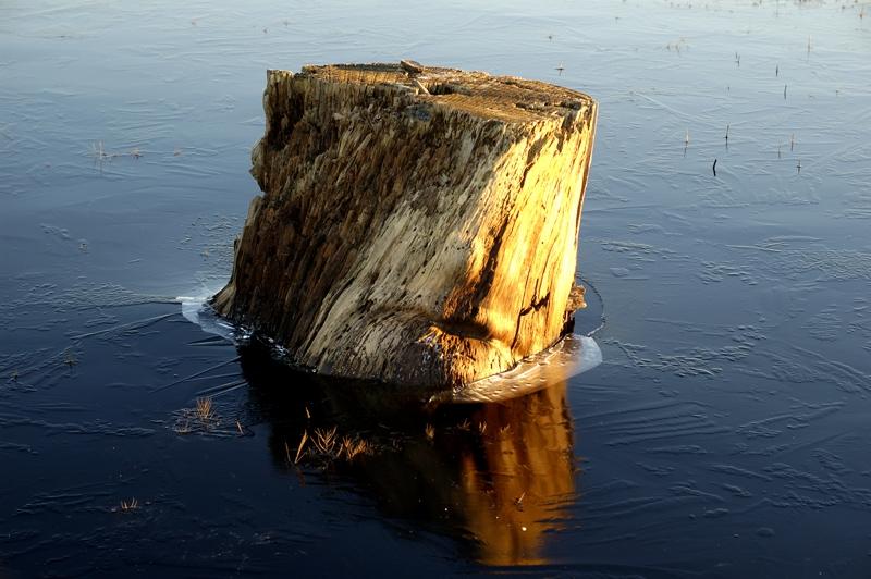 Log Iceberg