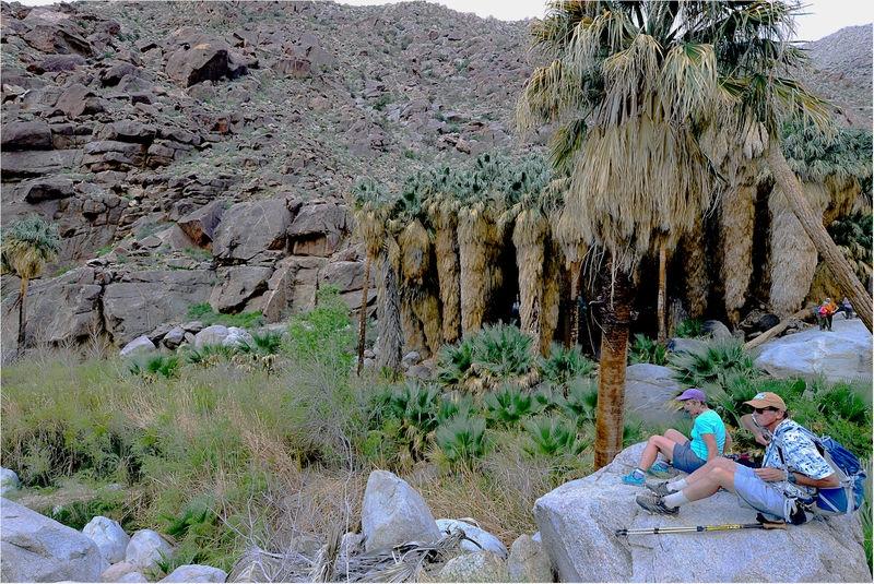 Desert trip , palm canyon