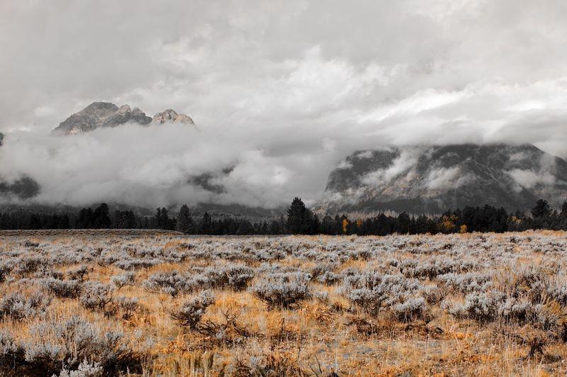 ANPAT16 - Teton