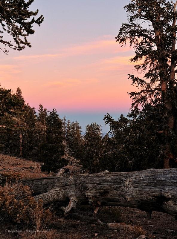 Bristelcone Sunset