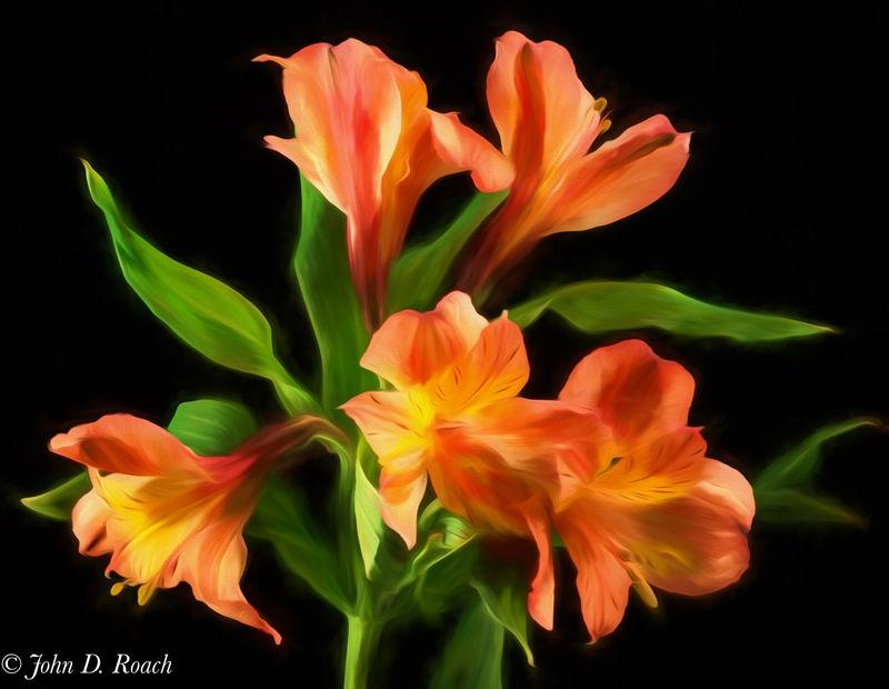 Peruvian Lilies - Painterly
