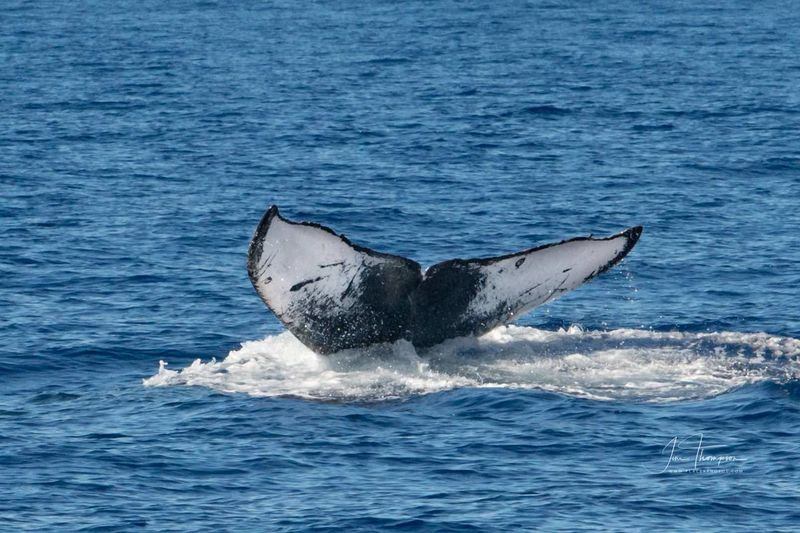 A Whale's Tail
