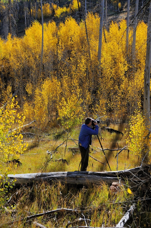 Steve Johnson (reuben) loves Aspens at  Grand Canyon (North rim) National P