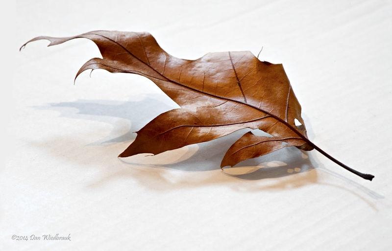 Leaf Mixed Ligghting