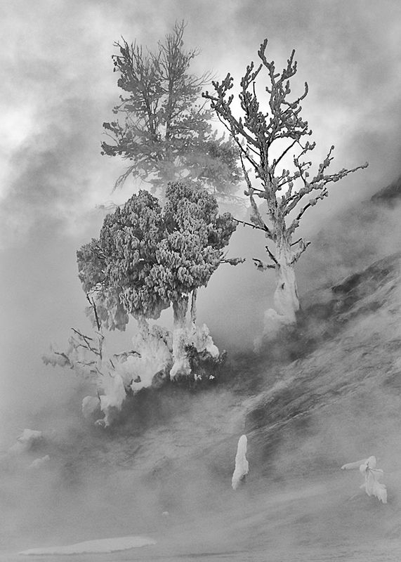 Ghost Trees in the Mist